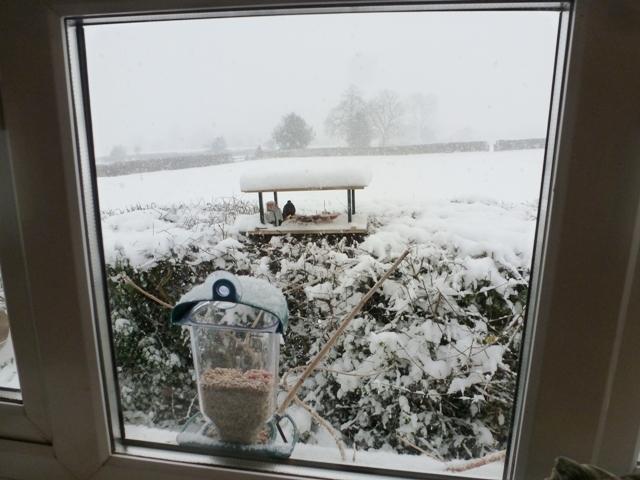 Snow_Jan2013_21