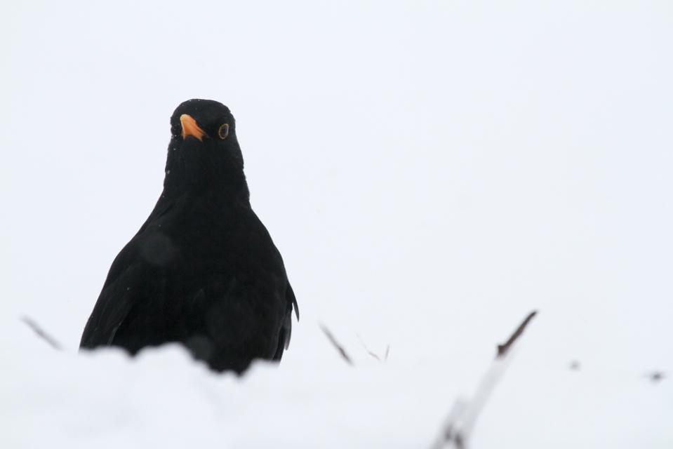 snowygarden_-6774