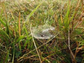 Spiders&Webs_-1000270