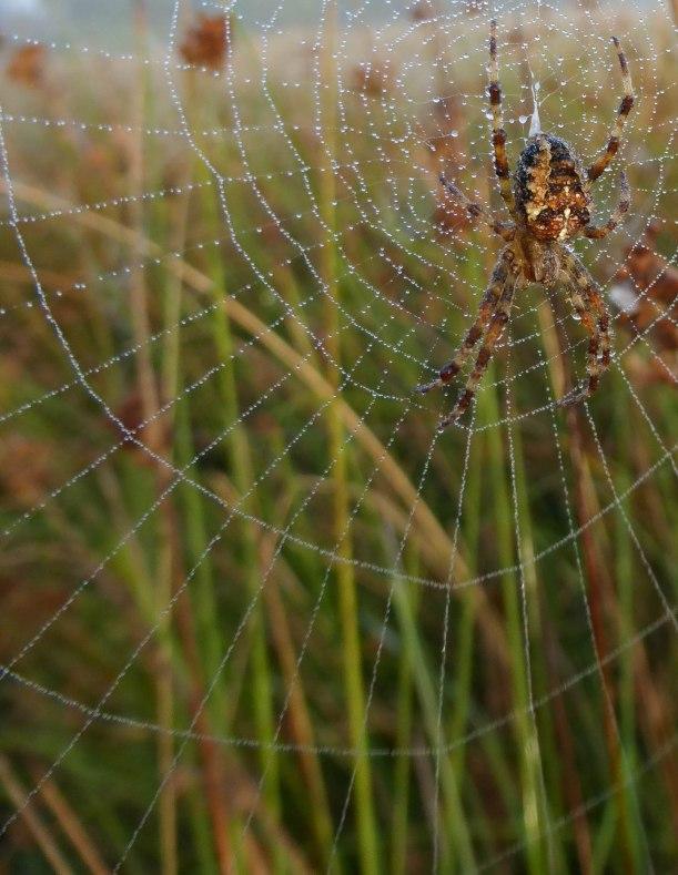 Spiders&Webs_-1000275