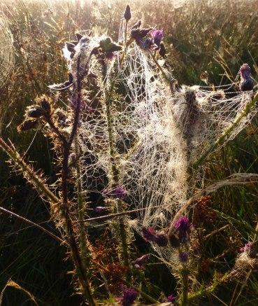 Spiders&Webs_-1000296