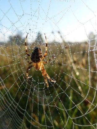Spiders&Webs_-1000298