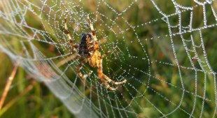 Spiders&Webs_-1000299