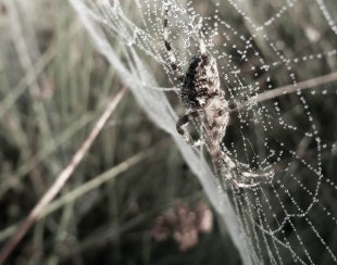 Spiders&Webs_-1000300