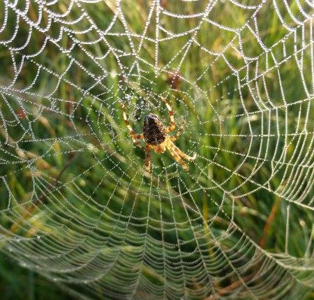 Spiders&Webs_-1000301