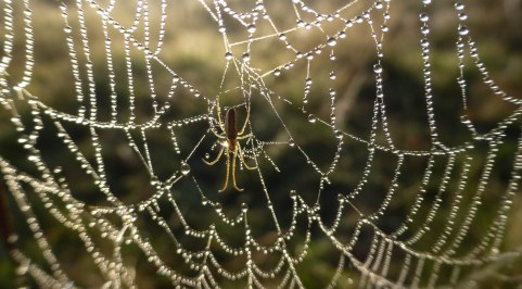 Spiders&Webs_-1000317