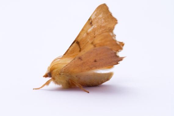 August Thorn-7876