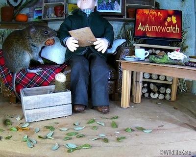 Autumnwatch vole1_