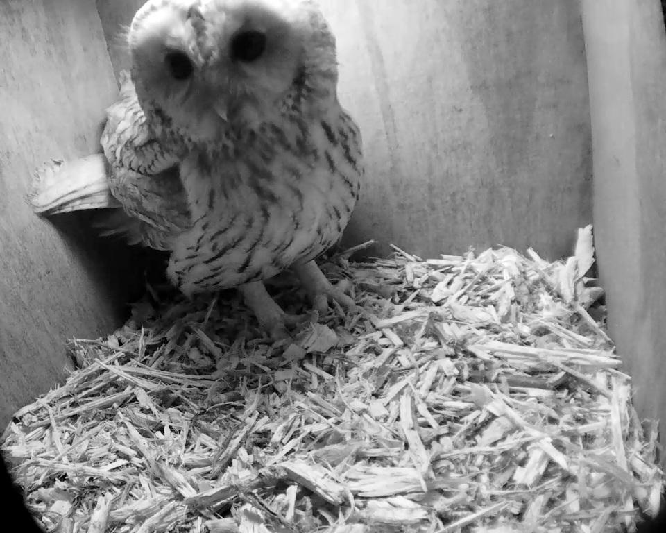 Tawny in Box 09_02_15_00012