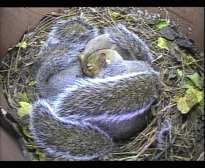 Nov 15 Squirrelsx4_00000