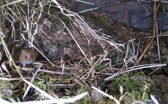 Wildlife Pond Mammal Box HD 2016-01-02 08-11-02.090
