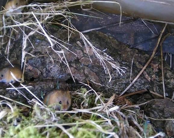Wildlife Pond Mammal Box HD 2016-01-06 14-35-55.541