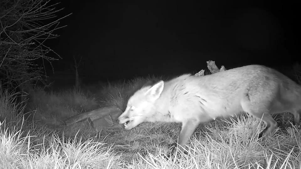 Vivotek Fox cam 2016-03-16 03-20-42.651
