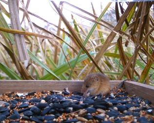 Vivotek Harvest Mice on 192.168.1.14 2016-03-14 18-19-32.077