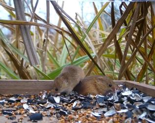 Vivotek Harvest Mice on 192.168.1.14 2016-03-15 16-14-05.346