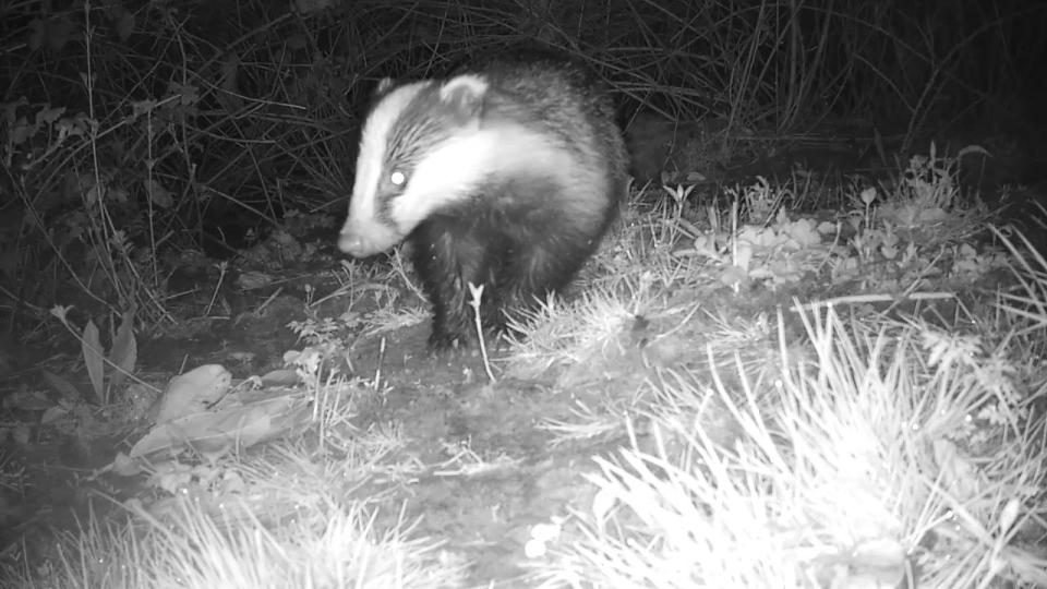Badger Sett 2 (192.168.1.52) 2016-04-16 23-51-10.807
