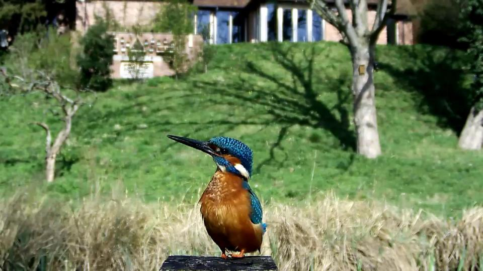 Kingfisher VIVOTEK 192.168.1.132 2016-04-12 10-40-00.599