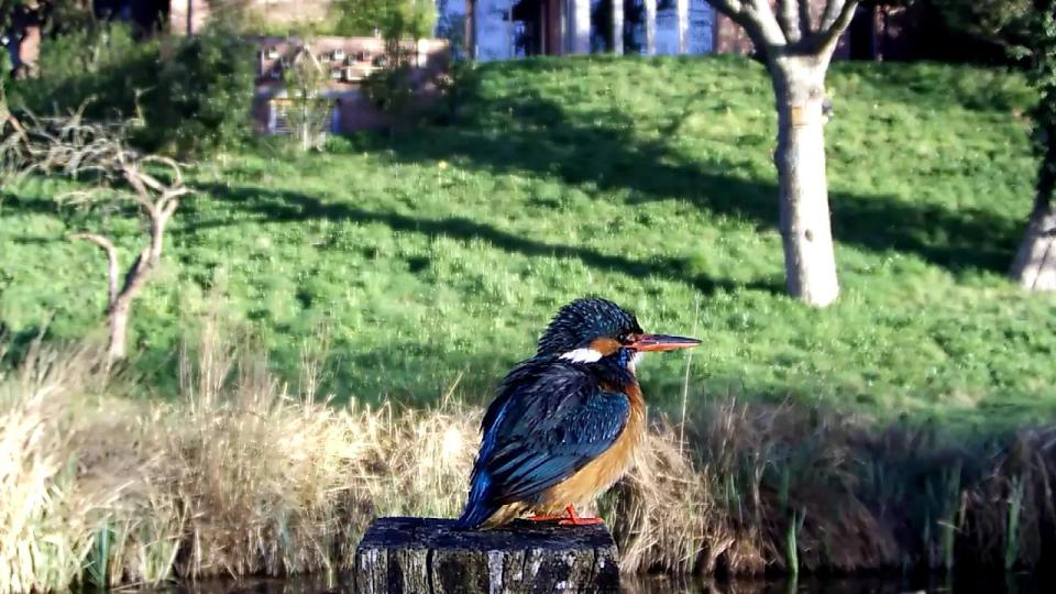 Kingfisher VIVOTEK 192.168.1.132 2016-04-20 07-25-44.946