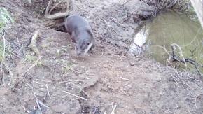 Daylight Otter leaves 30.4.16_00001