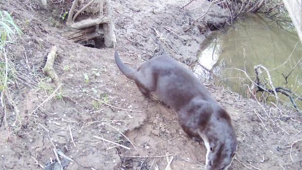 Daylight Otter leaves 30.4.16_00002