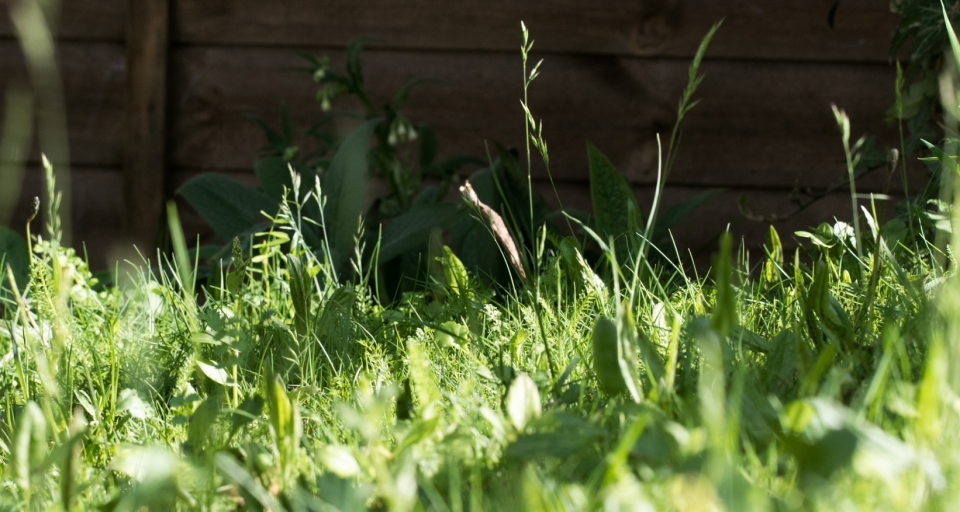 Garden May 2016 _-4940_lowRes2