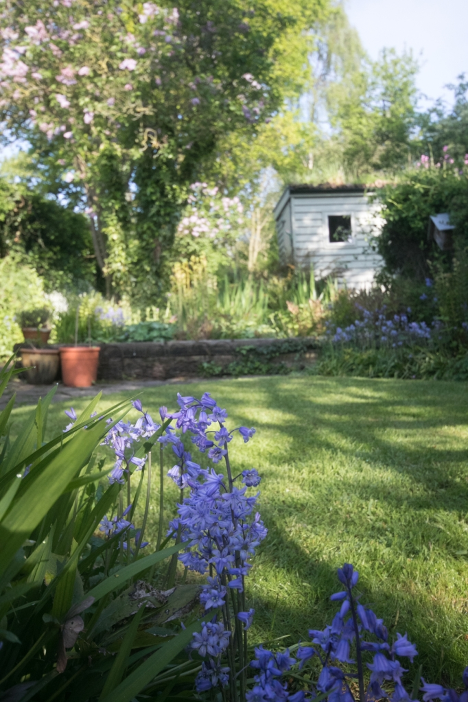 Garden May 2016 _-4985_lowRes16