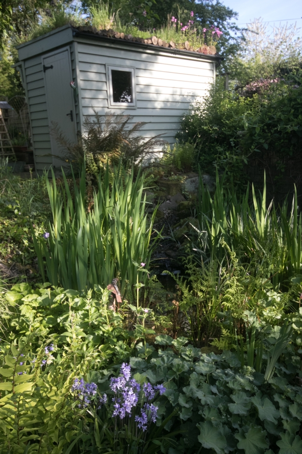 Garden May 2016 _-4988_lowRes19