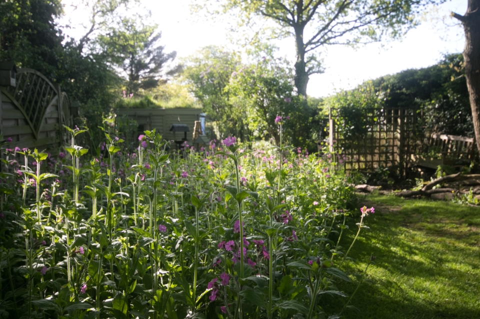 Garden May 2016 _-4997_lowRes23