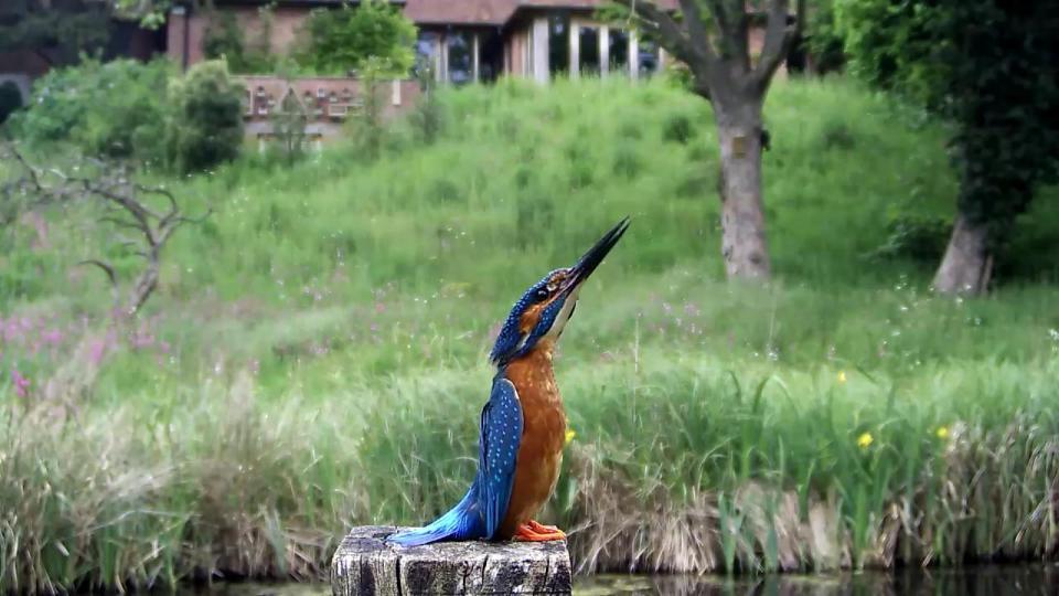 Kingfisher VIVOTEK 192.168.1.132 2016-05-25 15-42-38.897