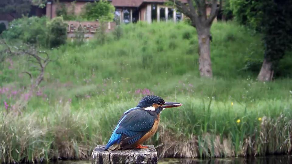 Kingfisher VIVOTEK 192.168.1.132 2016-05-25 16-05-57.843