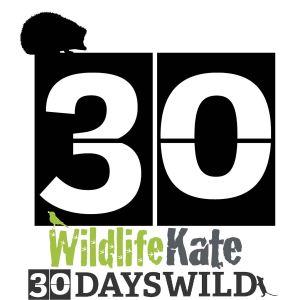 WLK 30 Days Wild_countdown_30