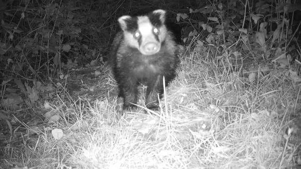 Badger Sett 2 (192.168.1.52) 2016-06-22 01-58-11.463
