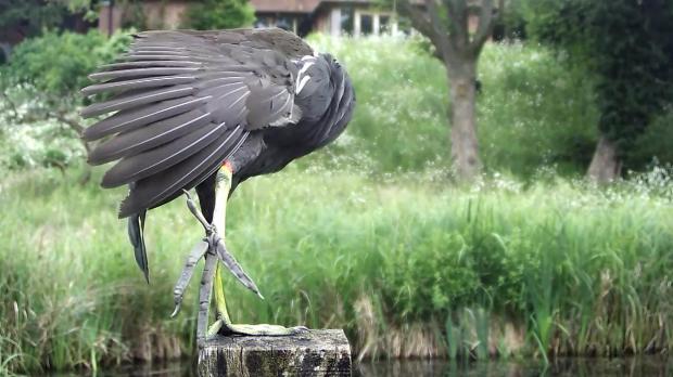 Kingfisher VIVOTEK 192.168.1.132 2016-06-18 06-47-20.700
