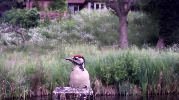 Kingfisher VIVOTEK 192.168.1.132 2016-06-21 10-23-46.276