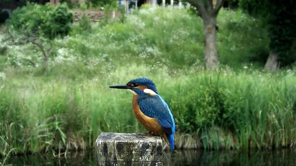 Kingfisher VIVOTEK 192.168.1.132 2016-06-30 12-46-40.644