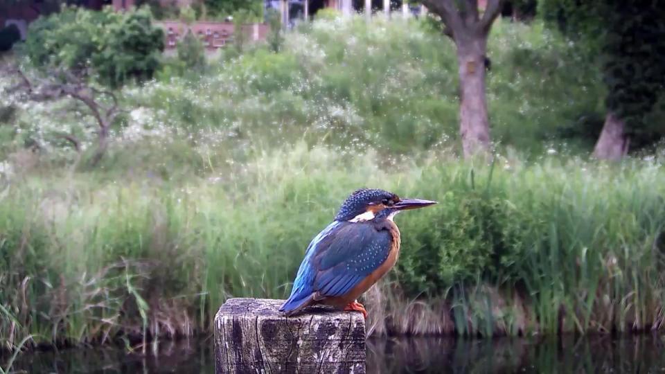 Kingfisher VIVOTEK 192.168.1.132 2016-06-30 15-22-42.660