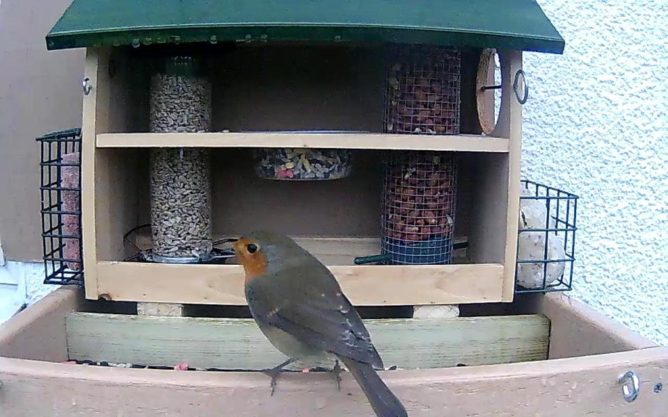 cam14-patio-feeders-2016-09-26-07-08-12-667