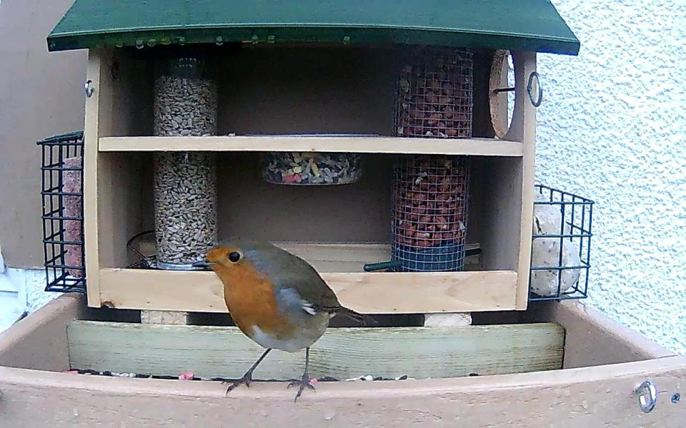 cam14-patio-feeders-2016-09-26-07-08-34-462