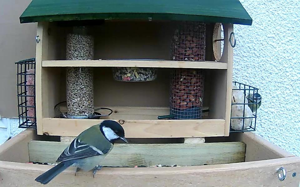 cam14-patio-feeders-2016-09-26-09-00-54-404
