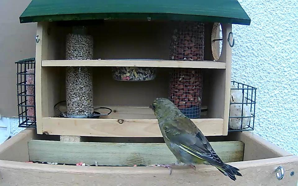 cam14-patio-feeders-2016-09-26-09-02-21-282