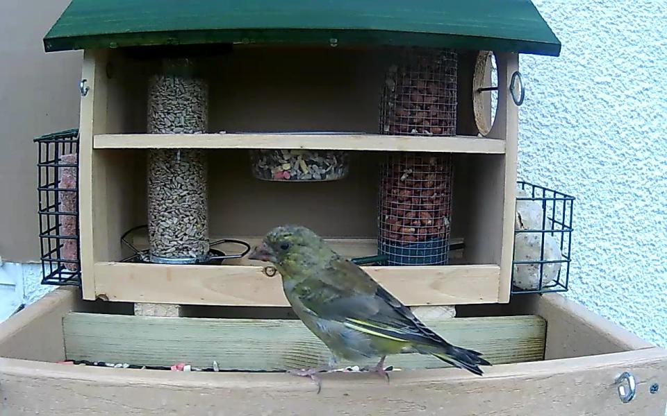 cam14-patio-feeders-2016-09-26-09-02-23-682