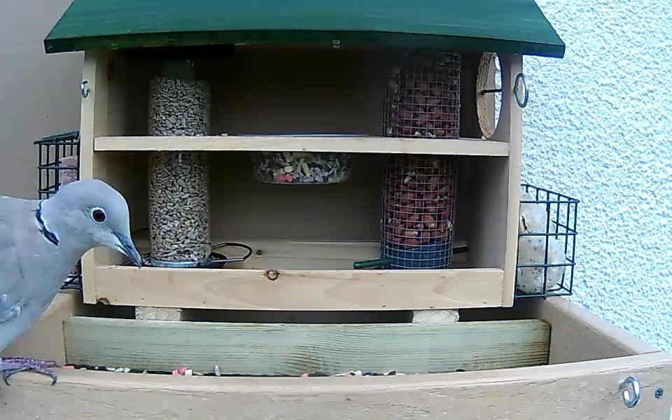 cam14-patio-feeders-2016-09-26-09-04-24-175
