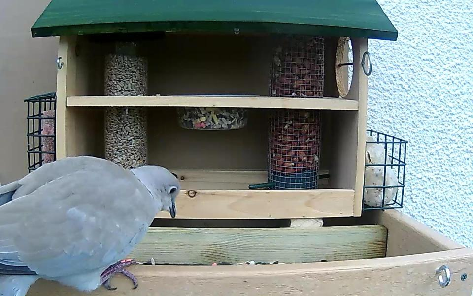cam14-patio-feeders-2016-09-26-09-04-38-771