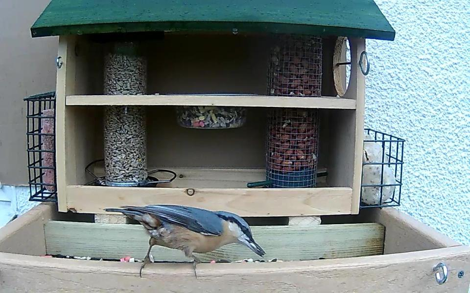 cam14-patio-feeders-2016-09-26-09-23-37-479
