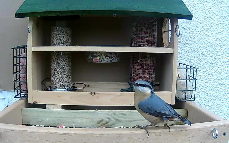 cam14-patio-feeders-2016-09-26-09-24-58-892