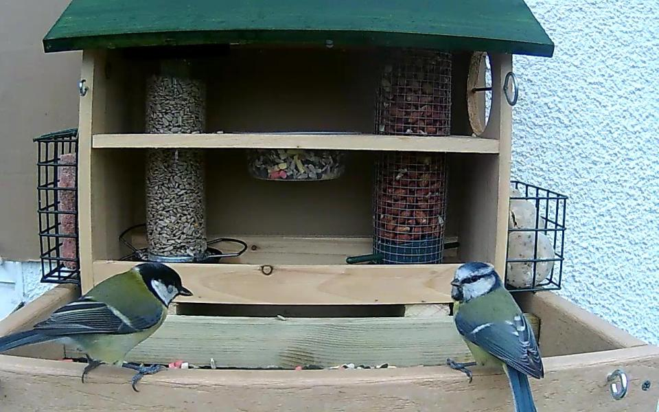 cam14-patio-feeders-2016-09-26-09-45-59-660