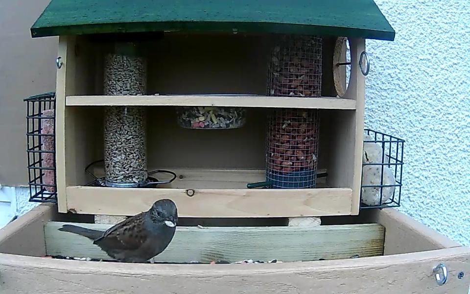 cam14-patio-feeders-2016-09-26-10-18-03-132