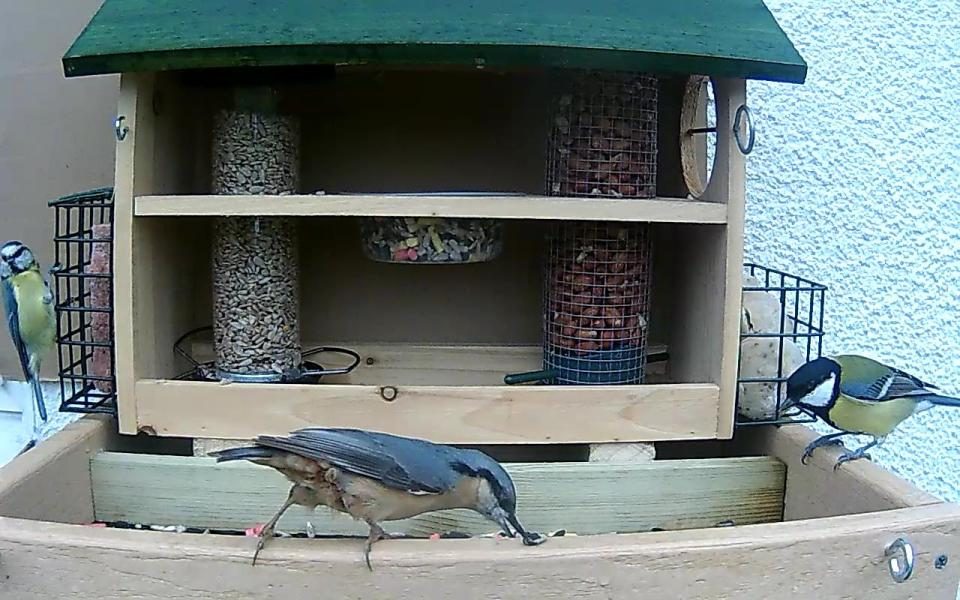 cam14-patio-feeders-2016-09-26-10-38-19-620