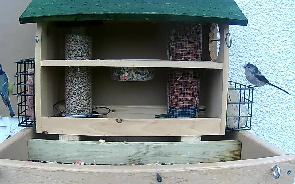 cam14-patio-feeders-2016-09-26-11-11-16-345