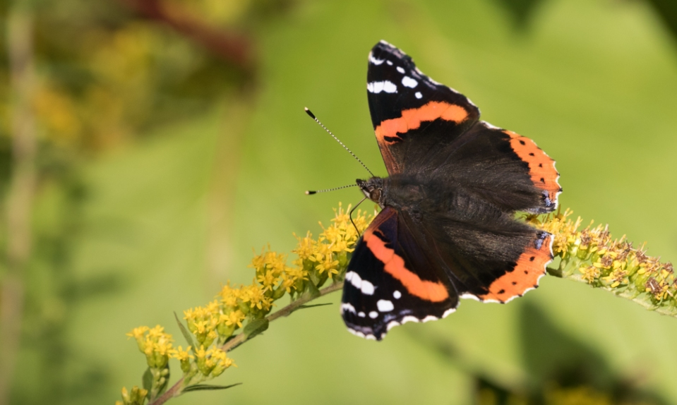 yv_butterflies-7839